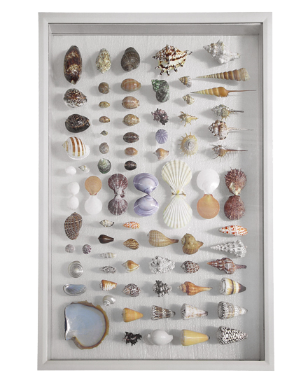 wall art tahiti shell collection large